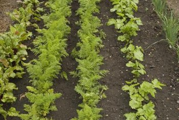 Loose, organic mulch works well between narrowly spaced vegetable rows.