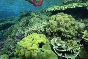 Reef protection includes educating tourists not to touch or step on coral.