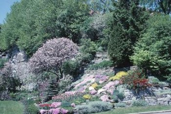 Plant A Variety Of Low Maintenance Shrubs To Ilize Hillside Garden