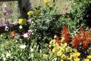 Choosing plants native to your area helps to minimize maintenance.