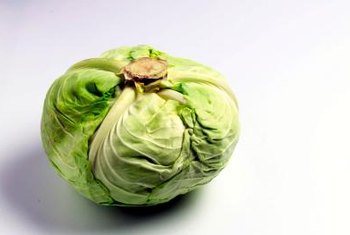 Healthy cabbage keeps in the refrigerator for up to two weeks.