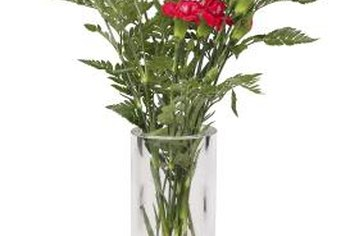 Carnations are a popular long-lasting cut flower.