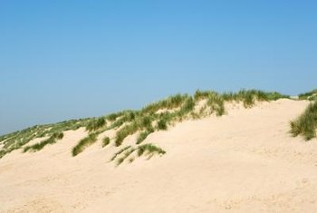 Dunes form when grasses prevent sand from being blown inland.