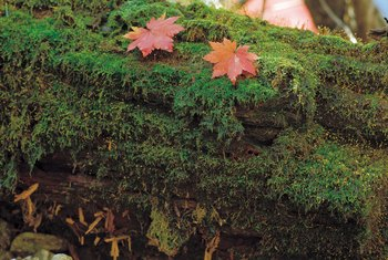Moss can grow on rocks and fallen logs as well as soil.