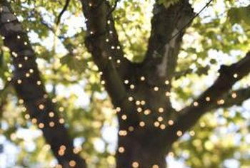 String lights in a tree create a festive atmosphere.