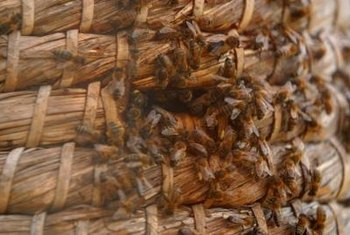 Environmental conditions greatly affect the defensiveness of a bee colony.