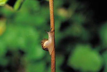 Snails can wreck havoc on a garden, sometimes warranting chemical control.