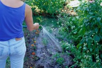 The types of vegetables you grow determines how often you fertilize.