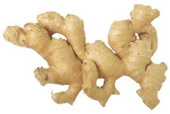 "Ginger root ""fingers"" can be broken off and planted."