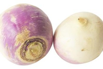 Purple Top White Globe turnips are commonly seen in produce departments.
