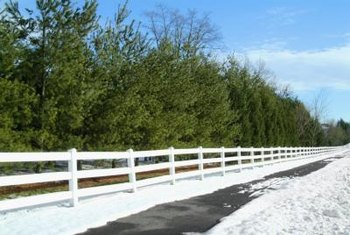Because of their rapid growth rate, green giant thuja are often used along property lines as a screen or windbreak.