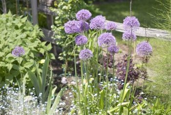 Put low-growing chives and mint at the front of your herb garden.