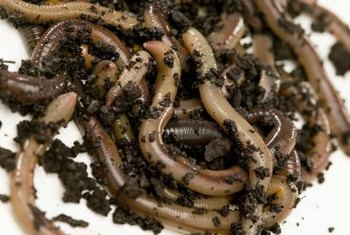 Worm farms can turn organic matter into rich soil amendment.