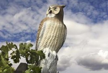 An owl decoy can scare away pest birds.