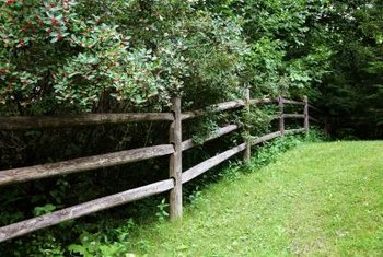 Fence design is a challenge when fences and trees vie for the same space.