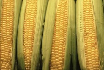 Corn on the cob is a good source of carbohydrates.