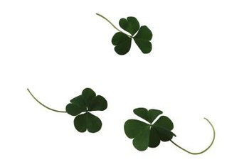Several perennials have leaves that look or behave like clover leaves.