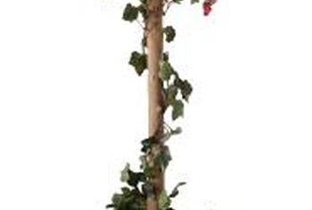 Rose bushes can be made to grow into short trees.