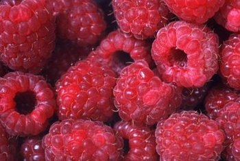 Ripe raspberries develop their full color and flavor.
