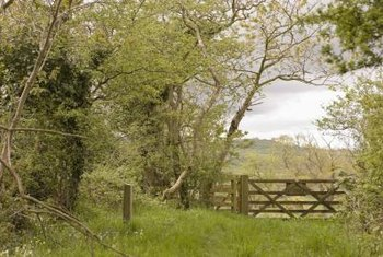 Remove unwanted trees from a fence line with a two-step process.