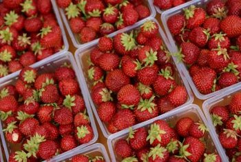Strawberries produce high yields of fruit if cultivated properly.