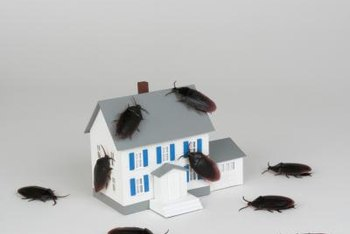 Boric acid can help rid your home of roaches.