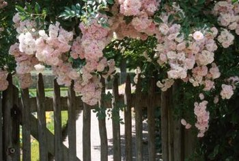 Flowering shrubs beautify a fenced area.