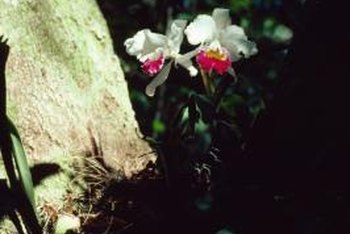 Orchids are well adapted to grow directly on the side of trees.