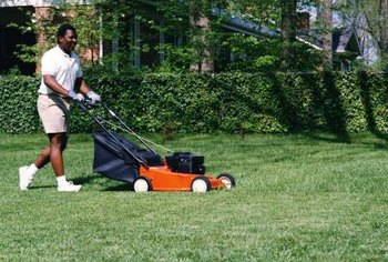 Mowing too soon removes fertilizer from the grass blades.