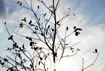 A tree with sparse leaves during the growing season may die.
