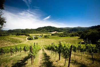 Mulching between your vineyard's rows may help boost grape production.