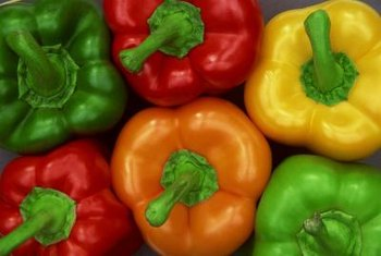 Peppers should be harvested by cutting the stem from the plant.