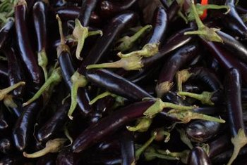 Purple ornamental peppers are edible, but very spicy.