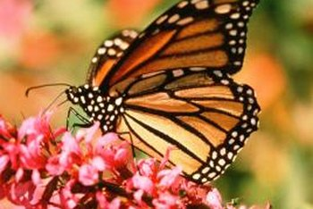 Butterflies are attracted to flowers with nectar.