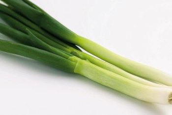 Green onions are vulnerable to downy mildew.