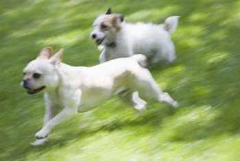 Your pooches can safely run and play once the Roundup has dried.