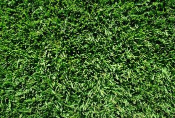 High traffic volume across the grass can damage the blades and cause barren spots.