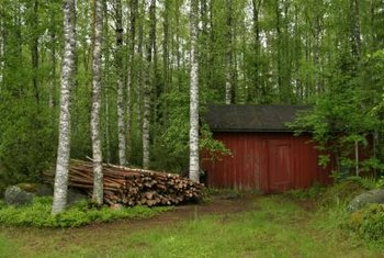 Choose native birches to bring nature to your backyard.
