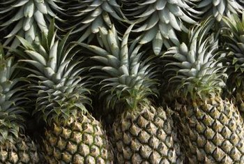 Commercially grown pineapples are uniform in size unlike potted pineapples.