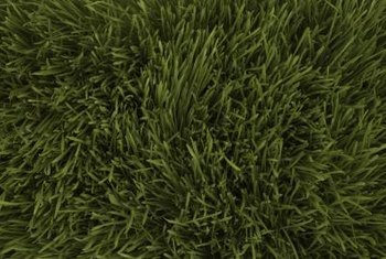 Healthy grass uses four to six pounds of nitrogen annually.