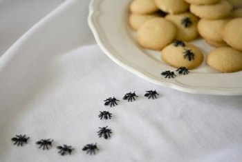 Eliminate outdoor ants before they find their way inside.