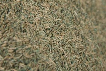 Grass seed needs protection from the elements, and mulch can do just that.