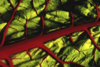 Swiss chard thrives in U.S. Department of Agriculture plant hardiness zones 2 through 11.