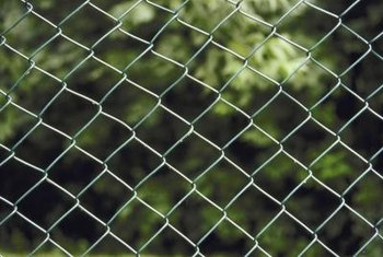 A chain link fence is an effective trellis for climbing plants.