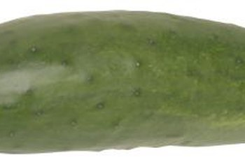Cucumbers in a circle produce more crops per square foot.