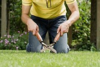 Electric or gas trimmers save valuable time when trimming your lawn.