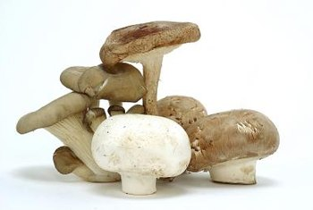 Mushrooms provide a wealth of potential health benefits.