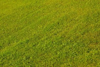 Choose red thread-resistant grass to grow a healthy lawn.