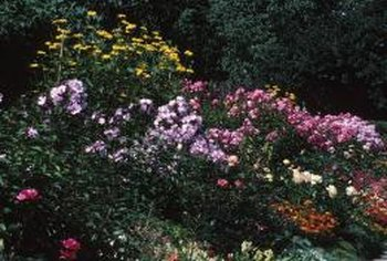 Colorful shrubs and perennials enhance a green backdrop of summer foliage.