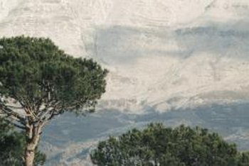 Olive trees add beauty as they are sculpted by the wind.